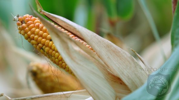 EPA Rejects Request Suspend Corn-Based Ethanol Use In Fuels